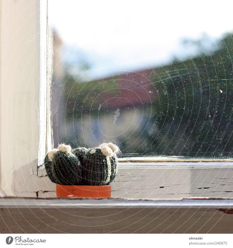 Handarbeit Pflanze Kaktus Zimmerpflanze Fenster Fensterscheibe Fensterrahmen Fensterbrett dreckig Häusliches Leben Wolle Farbfoto Menschenleer Textfreiraum oben