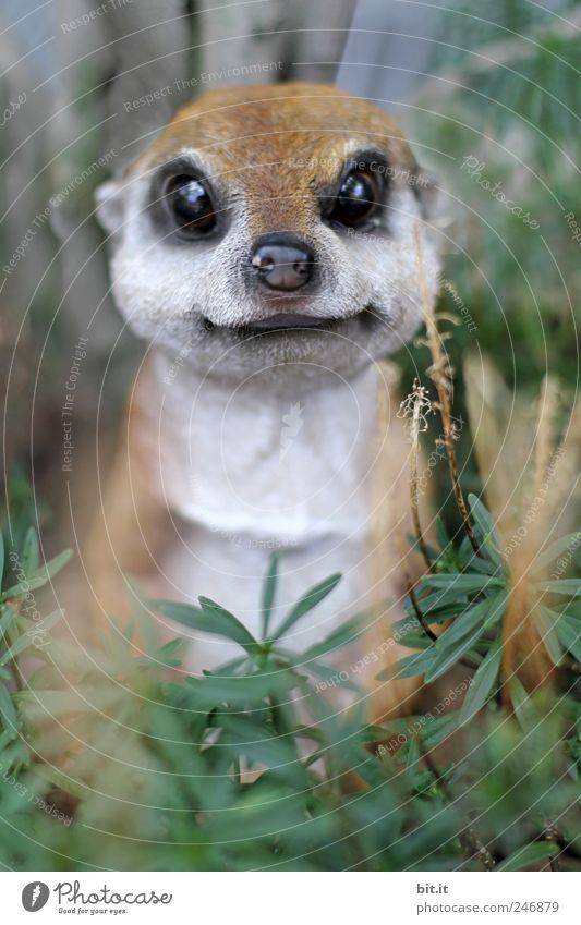 nimm mich mit Natur Pflanze Tier Tiergesicht Fell Schnauze Auge 1 Blick kuschlig Kitsch Freude Neugier Attrappe Plastikfigur Statue drollig herzlich