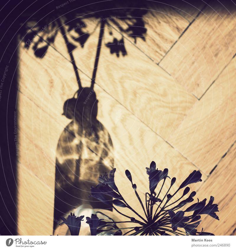 vorm fenster blau Gefühle Blüte braun elegant Design ästhetisch Perspektive Dekoration & Verzierung Häusliches Leben violett Flasche Partnerschaft Parkett Vase Blumenvase