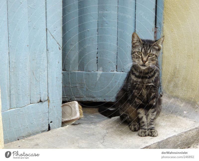 Tritt ein, bring Glück herrein blau Ferien & Urlaub & Reisen Tier Katze Tür Zufriedenheit authentisch Neugier beobachten Italien Dorf Haustier Interesse