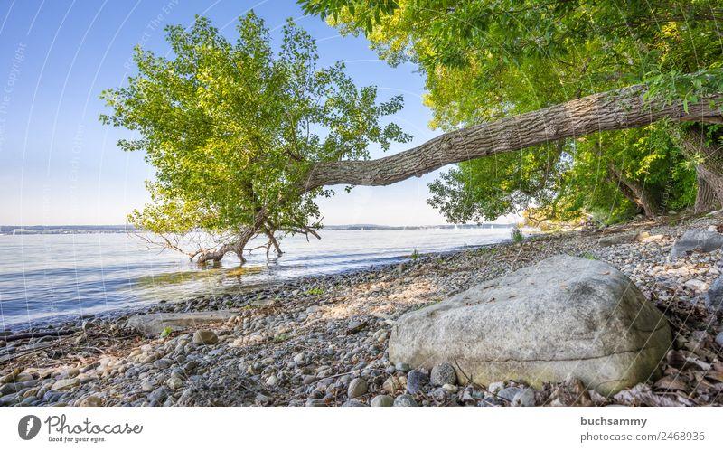 Bodenseeufer Ferien & Urlaub & Reisen Tourismus Ausflug Camping Sommer Sommerurlaub Strand Wassersport Segeln Baum Küste Seeufer Schwimmen & Baden blau grau