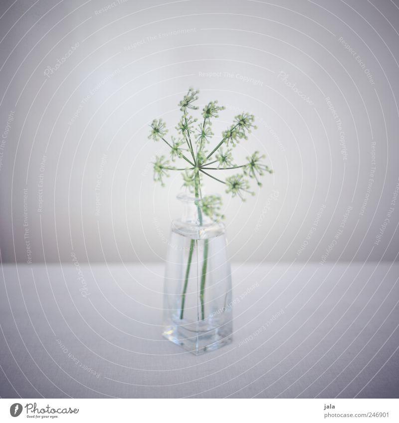 zartgrün Dekoration & Verzierung Pflanze Blume Vase Blumenvase Glas ästhetisch schön grau weiß zartes Grün filigran Farbfoto Innenaufnahme Menschenleer