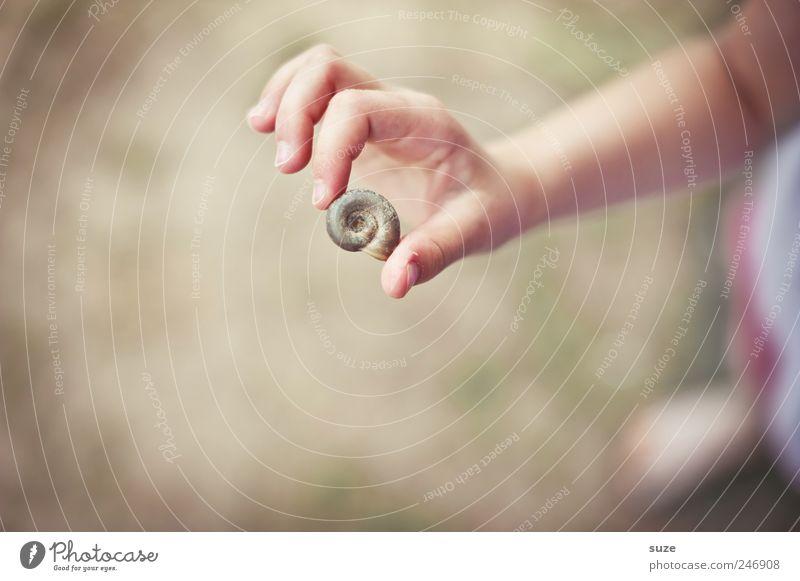 Spielhaus Freizeit & Hobby Spielen Mensch Kind Kindheit Arme Hand Finger 1 3-8 Jahre Wiese Schnecke festhalten klein natürlich niedlich trocken Schneckenhaus