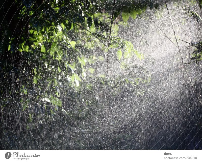 Duschierter Blauregen Glyzinie Gegenlicht Wasser nass Wassertropfen grün Pflanze Garten Gischt geheimnisvoll Blatt Kletterpflanzen Licht Nieselregen feucht