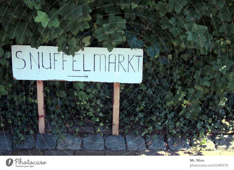ohne worte Pflanze Sträucher Blatt exotisch Markt Straßenrand Schilder & Markierungen Hinweisschild Niederlande Tourismus Typographie Flohmarkt Außenaufnahme