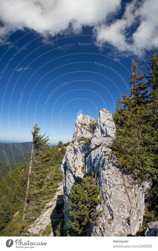 Heimaterde, Vaterland Natur Baum Pflanze Sommer Wolken Ferne Berge u. Gebirge Landschaft Luft Felsen Alpen Gipfel Bayern Fernweh Reinheit Nadelbaum