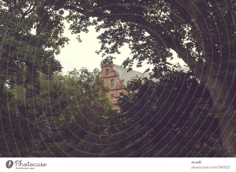 schönheit ist meist versteckt.. Natur alt Pflanze Landschaft Garten Park Burg oder Schloss Gießen