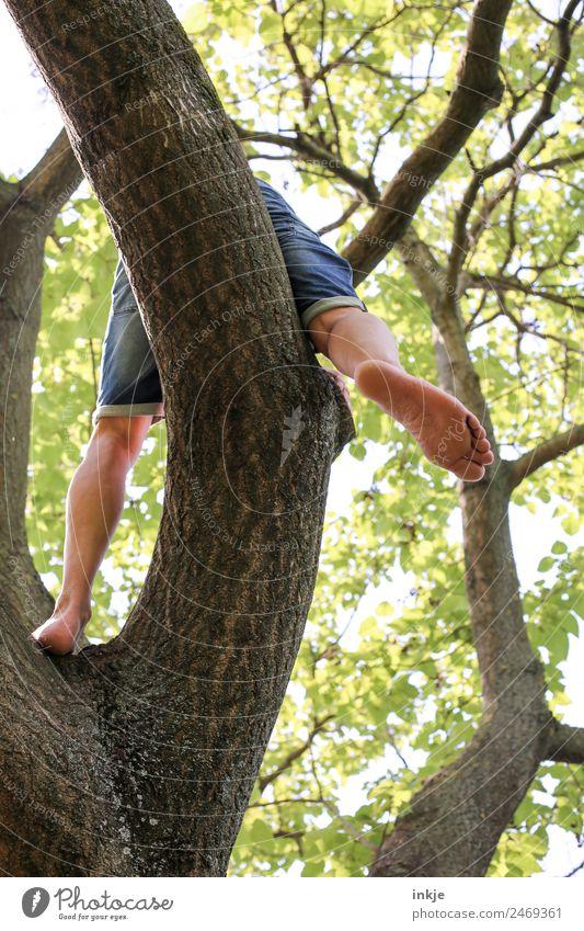 fauler Lenz | UT Dresden Mensch Natur Mann Sommer Baum Wald Erwachsene Lifestyle Leben Beine Fuß Ausflug Freizeit & Hobby maskulin Park sitzen