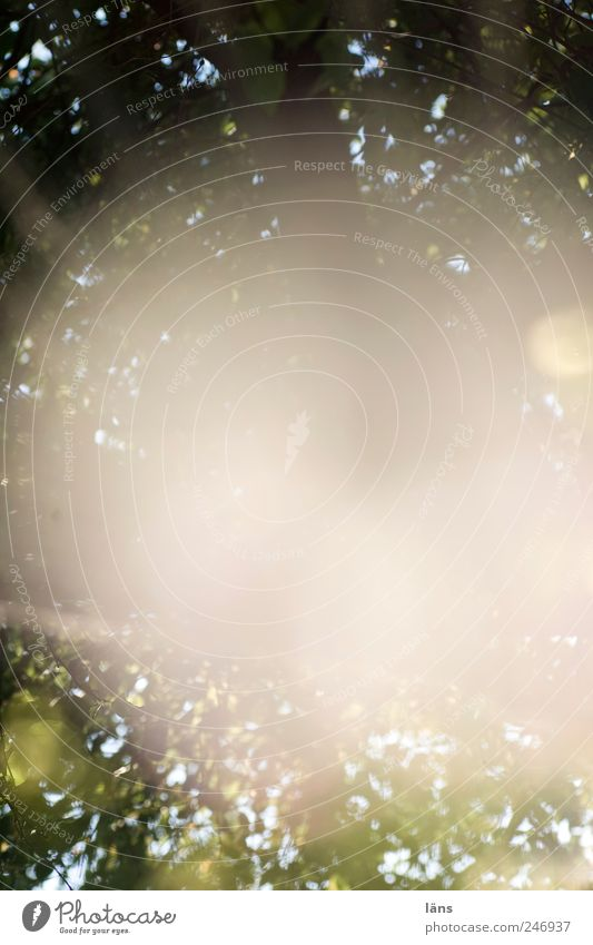 Flash Natur Pflanze Baum träumen Rätsel Ast Blatt Blätterdach Farbfoto Außenaufnahme Menschenleer Textfreiraum Mitte Licht Schatten Sonnenstrahlen Gegenlicht