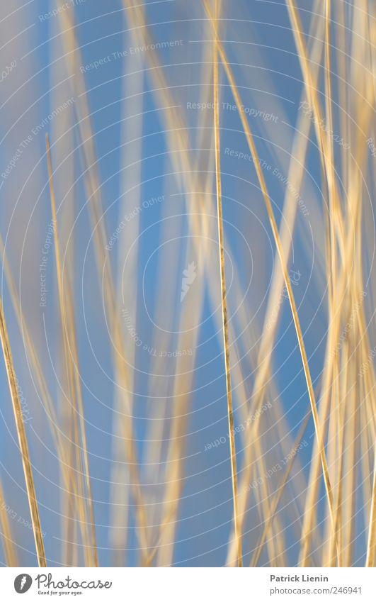 Spiekeroog | Blau Natur blau Ferien & Urlaub & Reisen Pflanze Meer Blatt Umwelt Landschaft Freiheit Gras Sand Küste Wetter Freizeit & Hobby Klima liegen