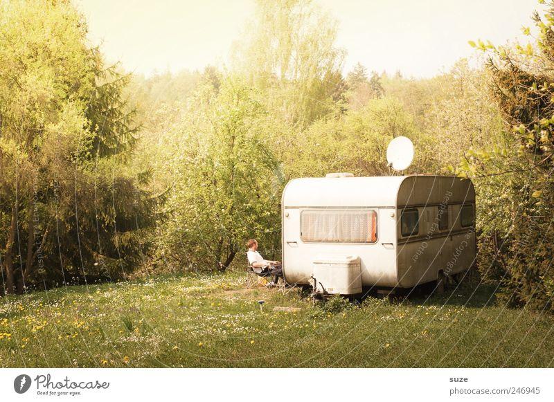 Urwüchsiger Erholung Freizeit & Hobby Camping Sommer Ruhestand Feierabend Mensch Mann Erwachsene Umwelt Natur Landschaft Pflanze Schönes Wetter Baum Gras