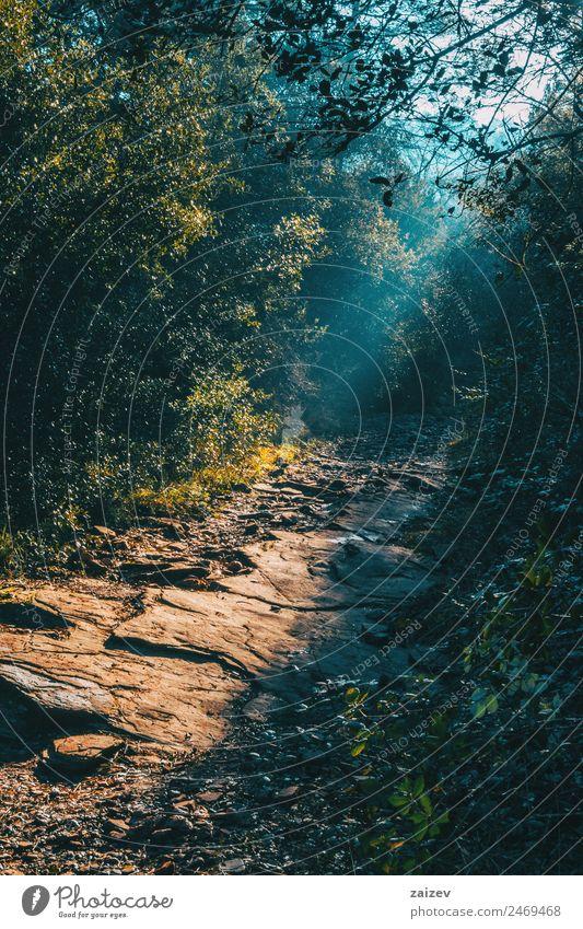 Landschaft mit einem Weg im Berg Design schön Ferien & Urlaub & Reisen Ausflug Abenteuer Berge u. Gebirge Umwelt Natur Erde Baum Blatt Park Wald Felsen Straße