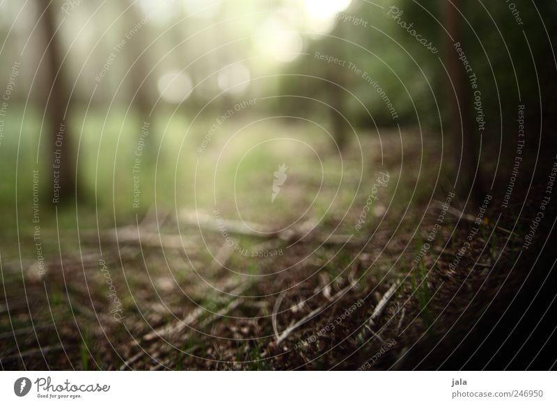 zauberwald Umwelt Natur Pflanze Baum Gras Sträucher Wald braun grün weiß Farbfoto Außenaufnahme Menschenleer Tag Unschärfe