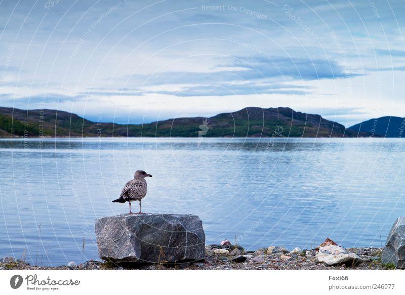 Fernweh Natur Wasser weiß schön blau Wolken Tier Leben Gefühle grau Stein Luft Vogel lustig Zufriedenheit frei