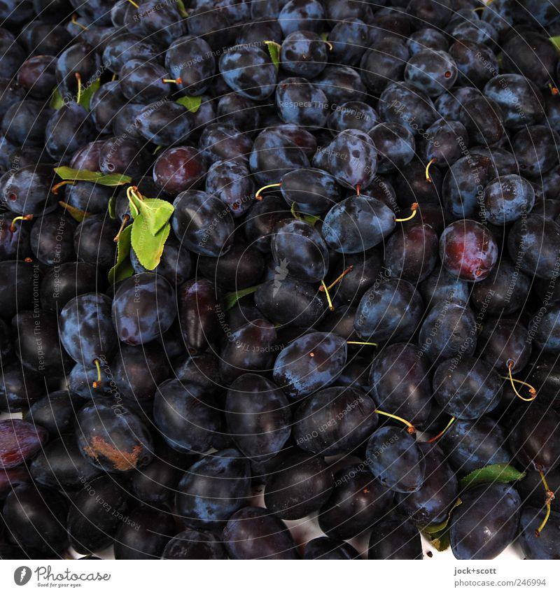 Zwetschge bekommen blau Farbe schwarz Gesunde Ernährung Stil Gesundheit liegen Frucht authentisch frisch ästhetisch viele rein lecker Stengel