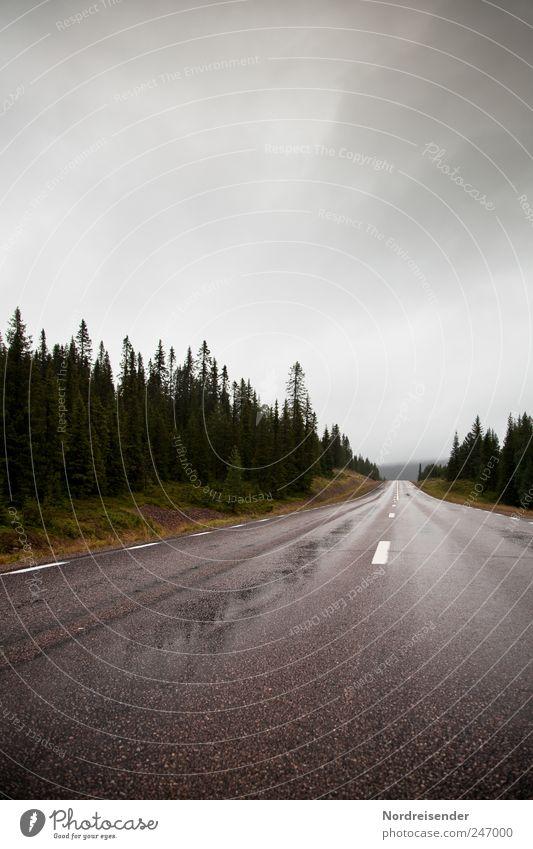 Kilometer fressen Natur Sommer Einsamkeit Wald Straße Landschaft Regen Linie Wetter Schilder & Markierungen Verkehr Klima fahren Streifen Güterverkehr & Logistik Asphalt
