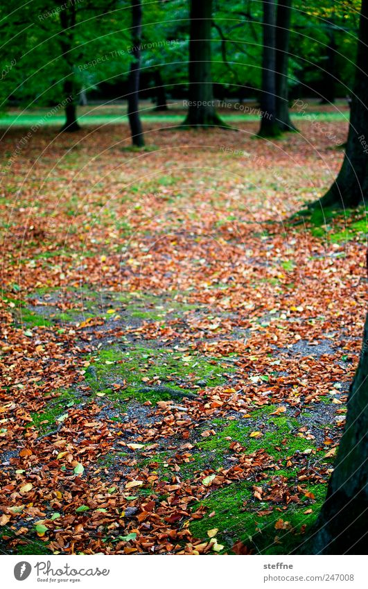 Herbst Baum schön Blatt ruhig Wald Herbst Landschaft Park Müdigkeit Moos Buche Buchenwald