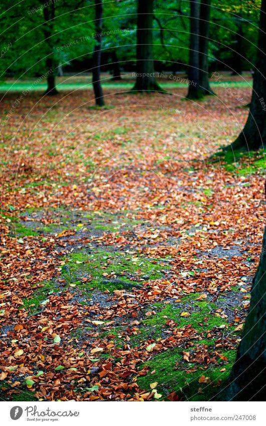 Herbst Baum schön Blatt ruhig Wald Landschaft Park Müdigkeit Moos Buche Buchenwald