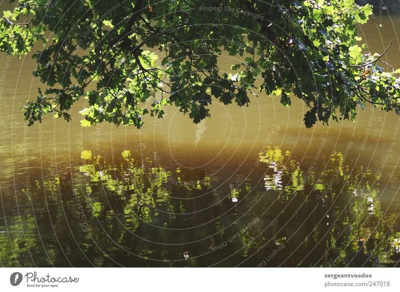 Delmenhorster Graft Natur Wasser grün Baum Pflanze Sommer Blatt ruhig Einsamkeit Erholung Umwelt Landschaft träumen Stimmung See braun