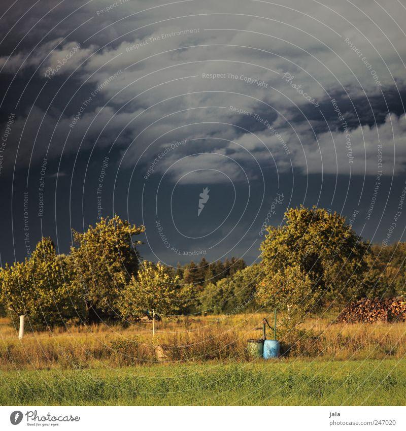 mischwetter Himmel Natur Baum grün blau Pflanze Wiese Landschaft Gras Umwelt braun natürlich Sträucher Gewitterwolken Wolkenloser Himmel Wildpflanze