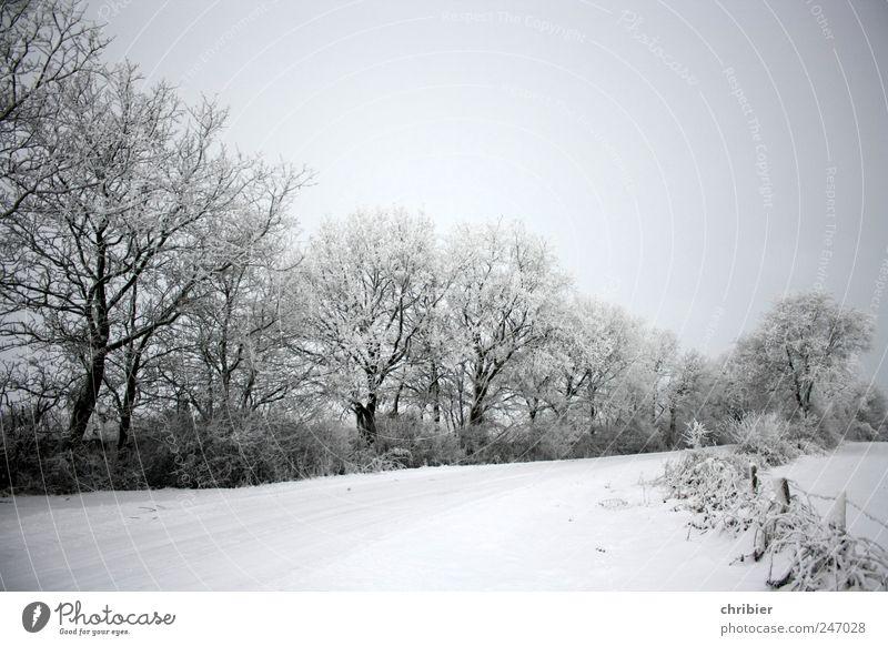 Schnees Stille Natur Landschaft Pflanze Himmel Wolkenloser Himmel Winter Eis Frost Baum Sträucher Knick Feld Zaun Wege & Pfade frieren glänzend hell kalt