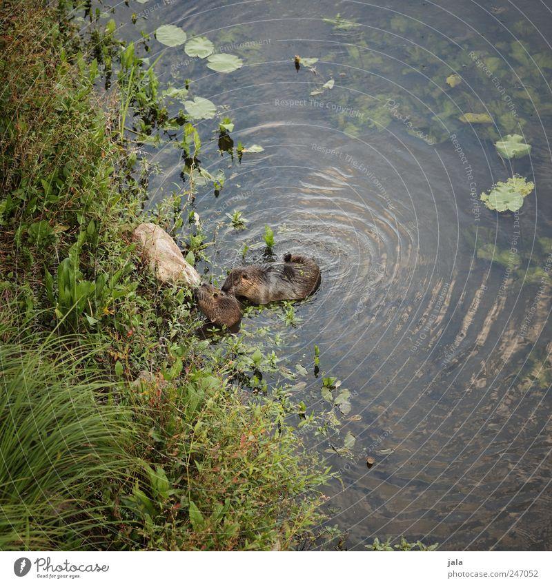 nutrias Natur Wasser grün blau Pflanze Tier Gras Umwelt braun Fluss natürlich Sträucher Wildtier Grünpflanze Wildpflanze Wasserpflanze