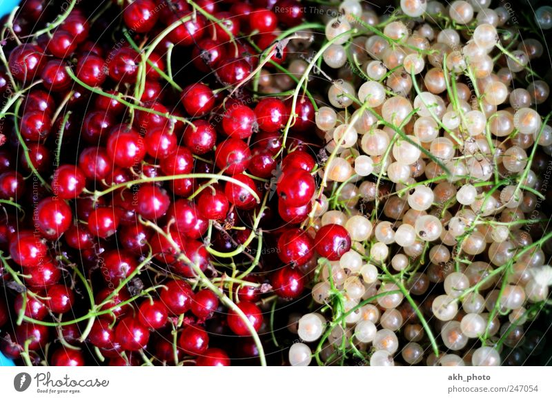 Johannisbeeren rotweiß Lebensmittel Frucht Ernährung Bioprodukte Gesunde Ernährung Gartenobst Gesundheit saftig süß Gegenteil gepflückt Farbfoto Außenaufnahme