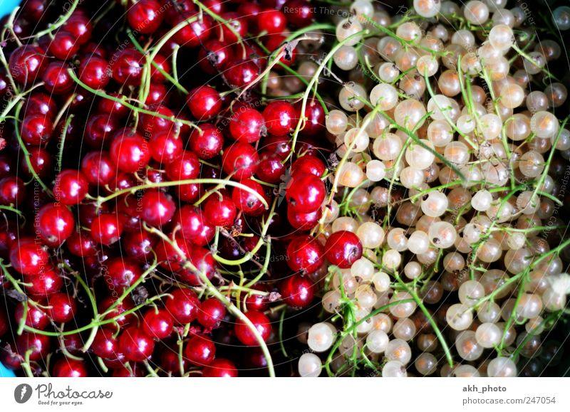 Johannisbeeren rotweiß weiß rot Gesundheit Frucht Lebensmittel Ernährung süß Gesunde Ernährung Bioprodukte Gegenteil saftig Johannisbeeren gepflückt Gartenobst