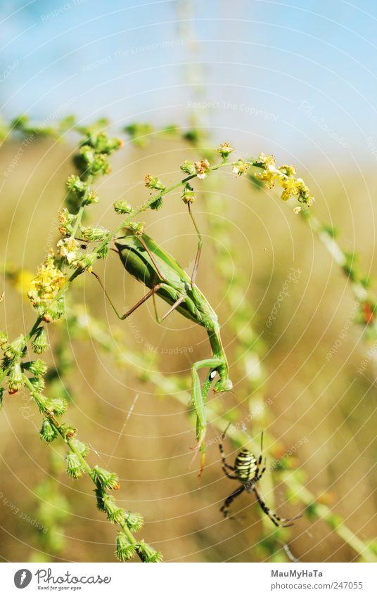 Himmel Natur weiß grün blau Pflanze Sommer Blatt Tier gelb Spielen Gras Garten Blüte Park braun