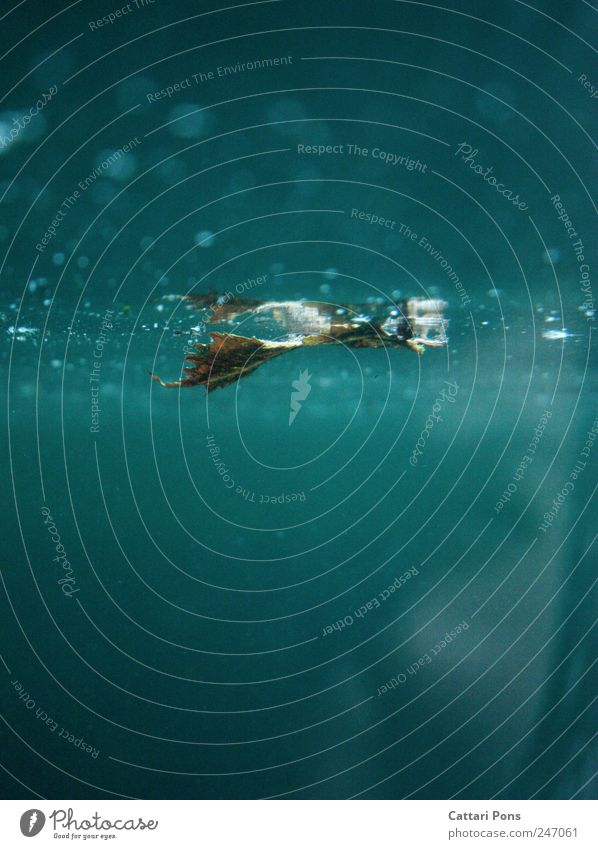 im Wasser blau Pflanze Blatt kalt glänzend nass Schwimmen & Baden feucht türkis Aquarium vertrocknet Erfrischung getrocknet gestaltbar außer Atem