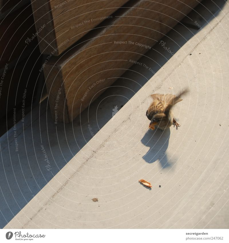 gib das wieder her, du ratte! Sommer Tier Leben Gefühle Bewegung Holz klein Lebensmittel braun Vogel Erde Kraft Ernährung Schönes Wetter Macht Leidenschaft