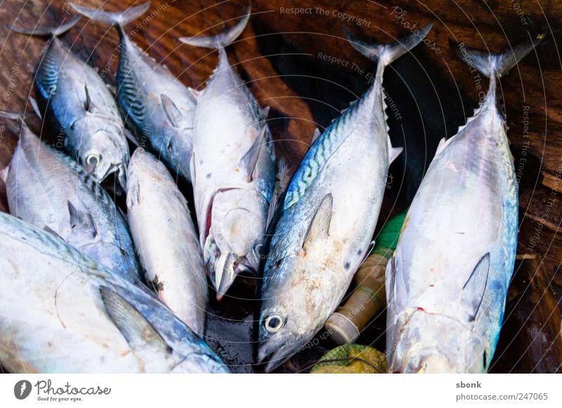 Fischies Ernährung Sushi Tier Totes Tier Aquarium Tiergruppe fangen frisch lecker Madagaskar Lebensmittel Meer Farbfoto Außenaufnahme Nahaufnahme Menschenleer