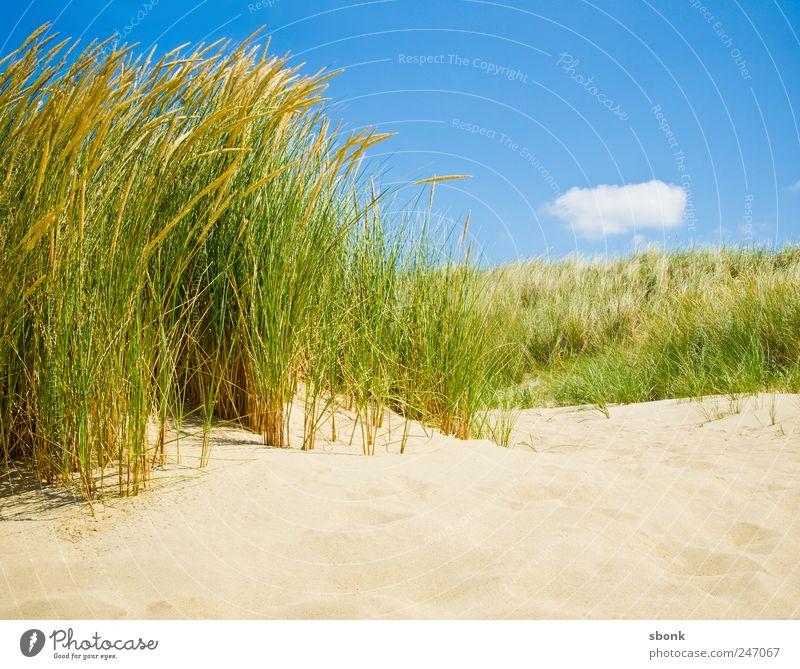 Hol Land Sand Luft Himmel Gras Sträucher Küste Strand Nordsee Meer blau Ferien & Urlaub & Reisen Niederlande Reisefotografie Düne Dünengras Wärme Sommer