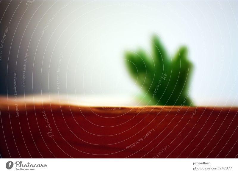 Rätselbild Dekoration & Verzierung Zimmerpflanze Blumentopf Pflanze Kaktus Grünpflanze Topfpflanze Sand Wachstum ästhetisch außergewöhnlich modern braun gelb