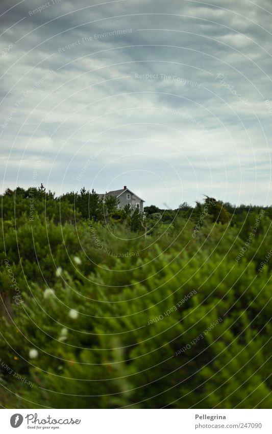 cape cod Natur Landschaft Wolken Sommer Sträucher Stimmung Farbfoto Außenaufnahme Menschenleer Abend