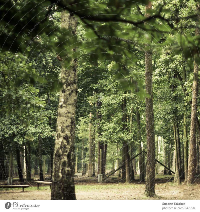 Heide Natur Tier Wachstum wandern Waldlichtung Bank Wildpark Zaun Baumstamm Buche Müllbehälter mehrfarbig Außenaufnahme Tag Dämmerung