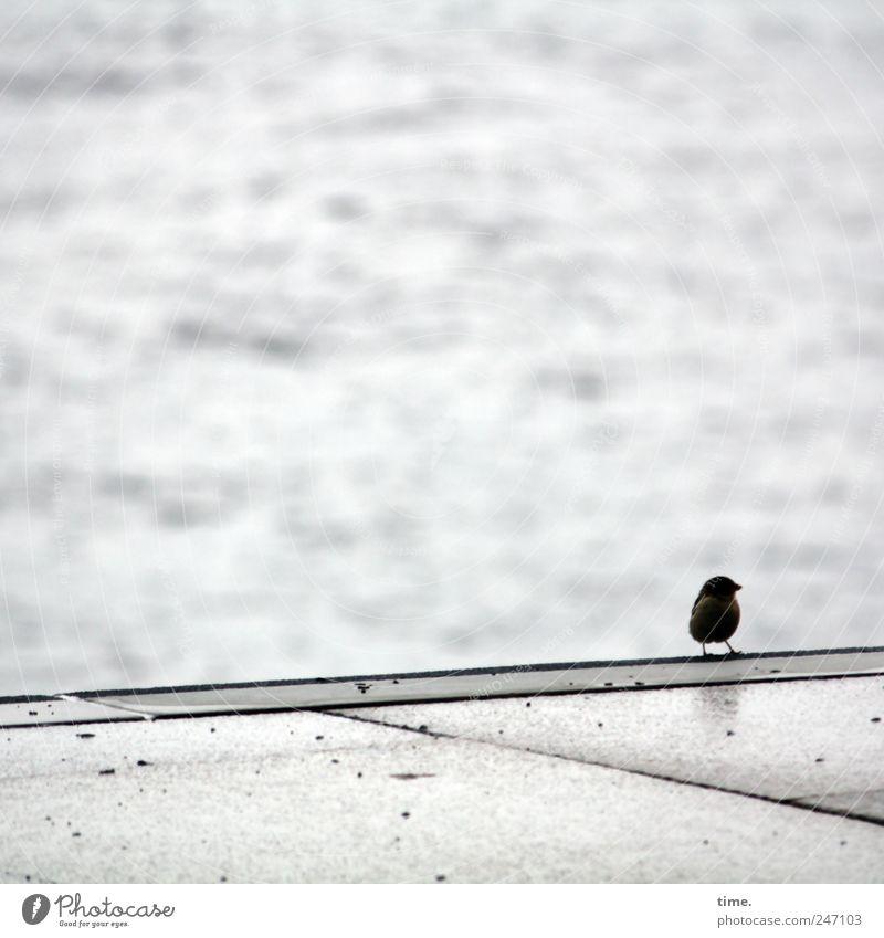 Dynamischer Single sucht aufregende Reisebegleitung Ferne 1 Mensch Wasser Regen Vogel Beton beobachten sitzen nass natürlich grau Wachsamkeit Einsamkeit Am Rand