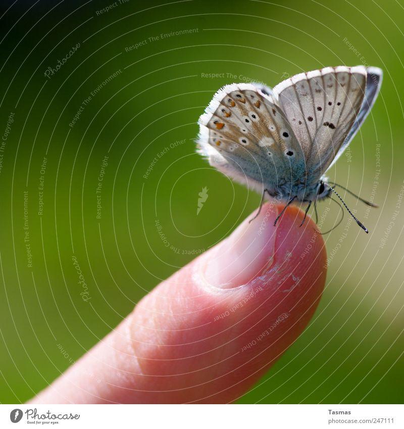 Der Papillon Mensch Haut Finger Schmetterling Flügel 1 Tier genießen hängen hocken dünn schön Farbfoto Außenaufnahme Detailaufnahme Makroaufnahme Kontrast