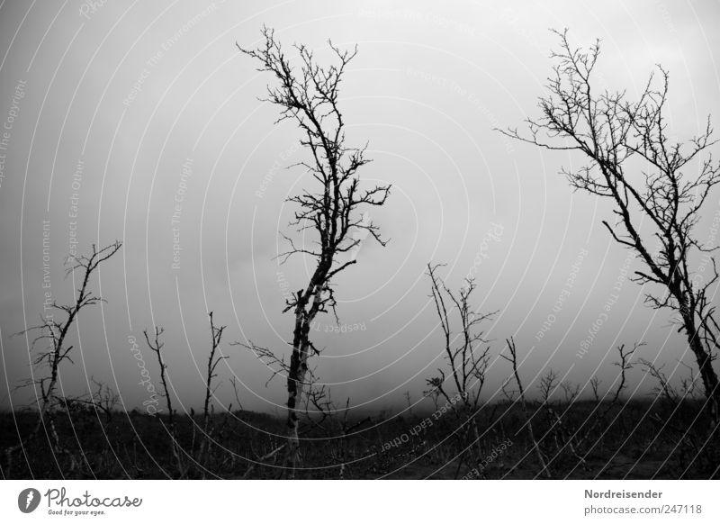 Anklagend Natur Pflanze Einsamkeit Wald Umwelt Landschaft dunkel Tod kalt Wetter Klima Nebel stehen trist bedrohlich Ende
