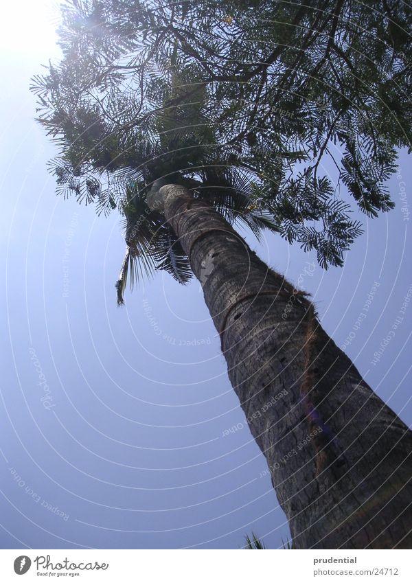 palme Sonne heiß Indien Palme Kerala
