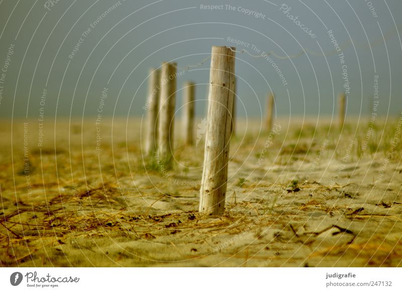 Ostsee Natur Strand Umwelt Landschaft Holz Sand Küste Stimmung geschlossen Ordnung Zaun Zaunpfahl
