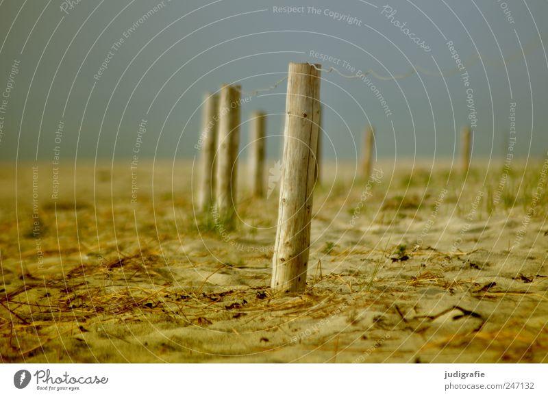 Ostsee Natur Strand Umwelt Landschaft Holz Sand Küste Stimmung geschlossen Ordnung Zaun Ostsee Zaunpfahl