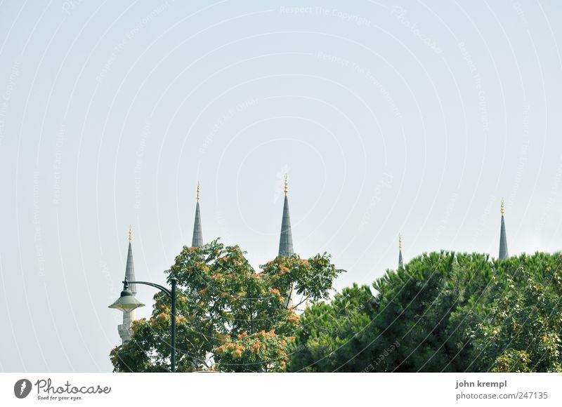 moscheu Himmel alt blau grün Baum Gebäude Religion & Glaube Spitze Bauwerk Wahrzeichen Stadtzentrum Sehenswürdigkeit Türkei Bekanntheit Istanbul