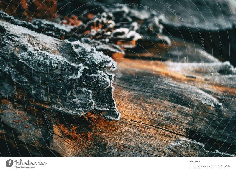 Stücke von Baumholzrinde, die im Sonnenlicht von einer dünnen Schneeschicht bedeckt sind Winter Berge u. Gebirge Garten Tapete Natur Pflanze Herbst Blatt Park