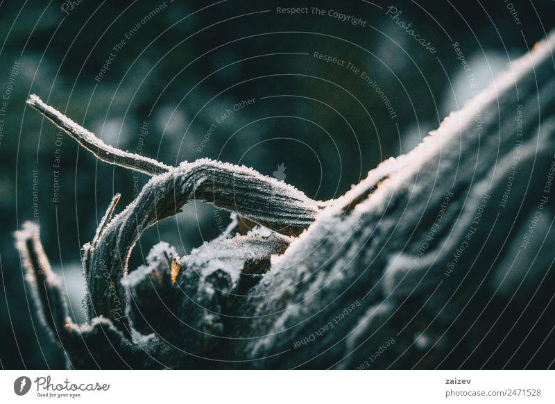 Stücke von Baumholzrinde, die im Sonnenlicht von einer dünnen Schneeschicht bedeckt sind Winter Berge u. Gebirge Garten Tapete Umwelt Natur Pflanze Herbst Klima