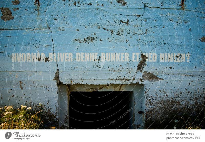 DÄNEMARK - XXI alt Pflanze Blume dunkel kalt Wand Gras Mauer Gebäude Tür ästhetisch Schriftzeichen bedrohlich außergewöhnlich Schutz Bauwerk