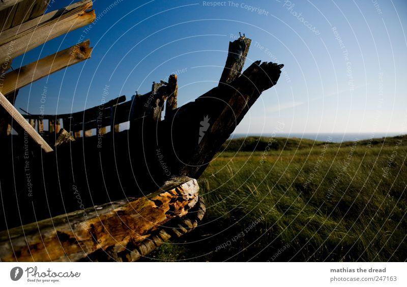 DÄNEMARK - XXIII Himmel Natur alt schön Sommer ruhig Wiese Landschaft Gras Holz Umwelt Küste Wind Horizont trist Sträucher
