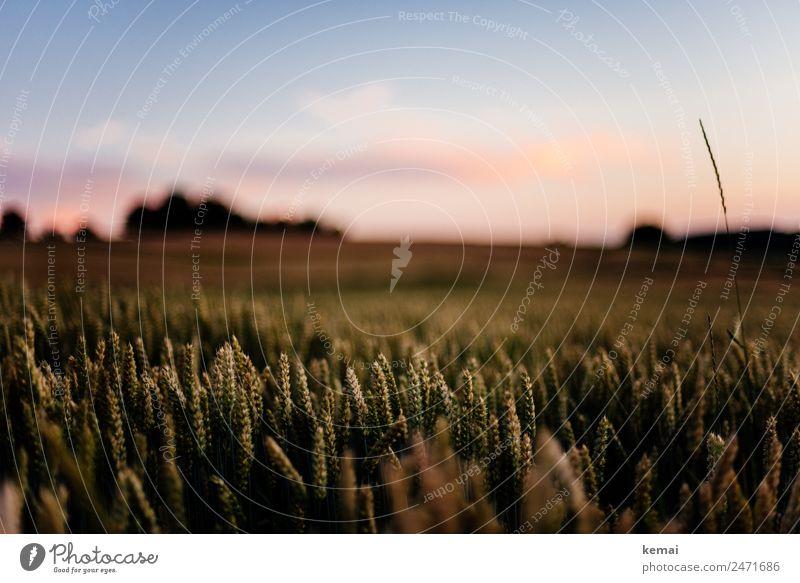 Sommerlicht harmonisch Wohlgefühl Zufriedenheit Sinnesorgane Erholung ruhig Freizeit & Hobby Abenteuer Freiheit Sonne Natur Pflanze Himmel Wolken Schönes Wetter