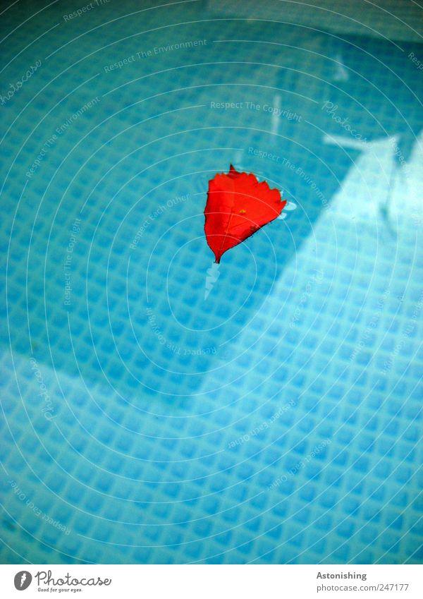 Blatt im Pool Natur Wasser weiß Baum blau rot Pflanze Haus kalt Herz dreckig nass Schwimmen & Baden Schwimmbad Kunststoff