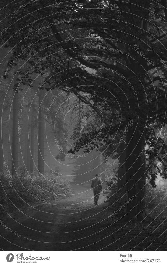 Wald im Nebel maskulin Mann Erwachsene 1 Mensch Natur Sommer schlechtes Wetter Regen Baum Sträucher Holz beobachten Bewegung wandern dunkel kalt natürlich